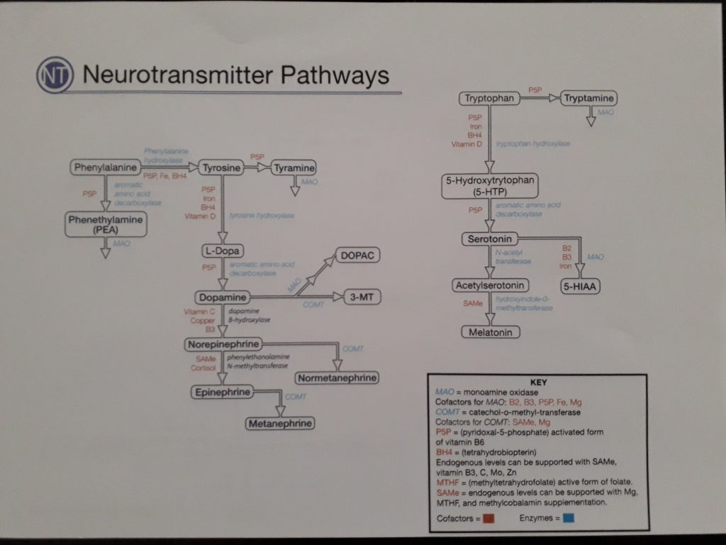 Neurotransmittorer
