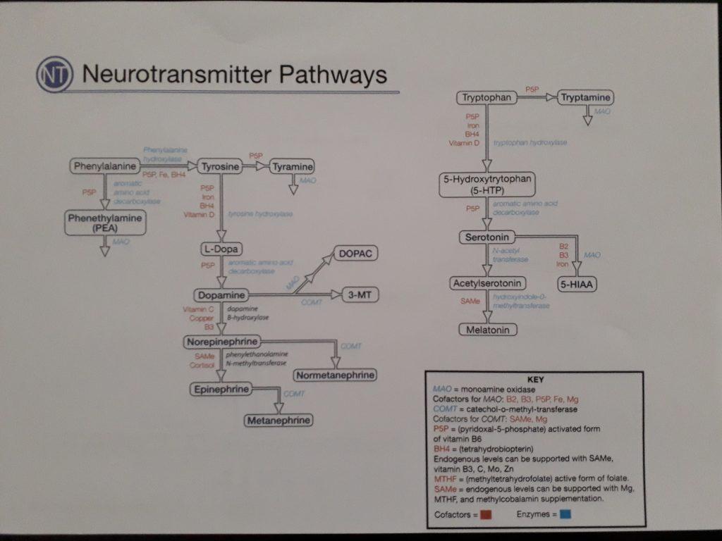 Neurotransmittorer